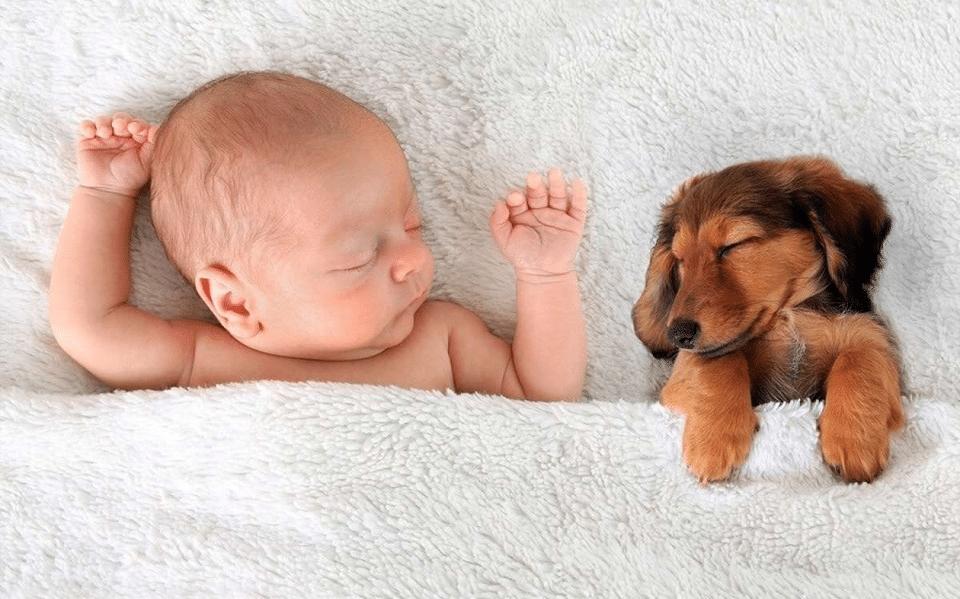 Bebeluș și pui de cățel dormind împreună.