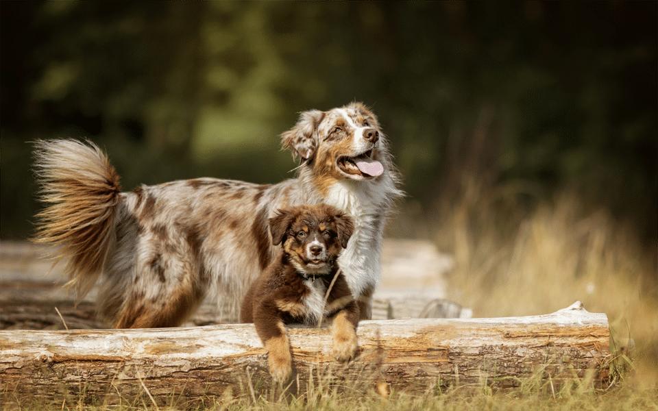 Câine adult și pui de cățel stând împreună.