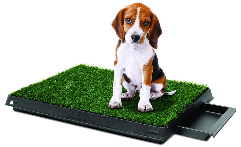 Pui de beagle pe o litiera de câine cu iarbă.