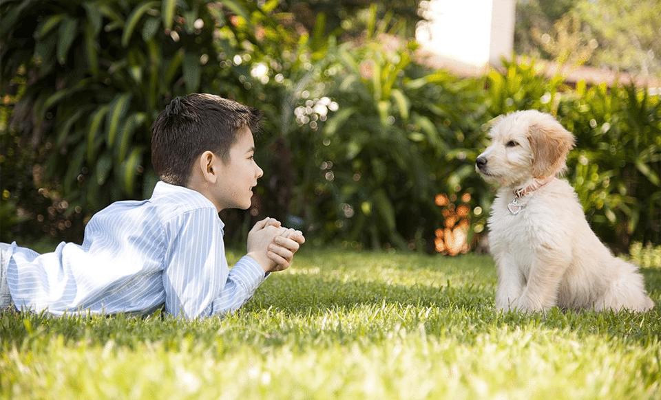 Băiețel și cățel privindu-se în ochi pe iarbă.