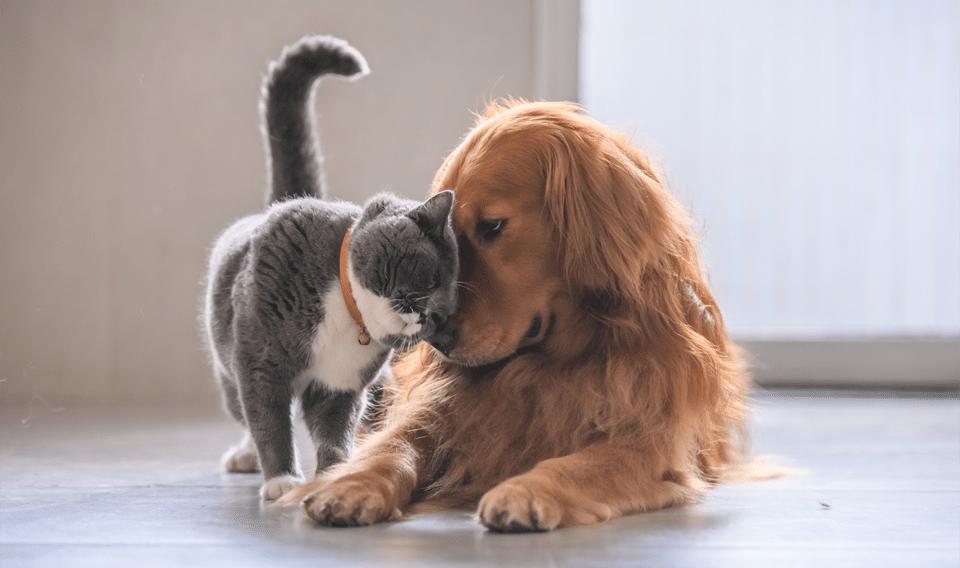 Câine și pisică stând unul lângă altul.