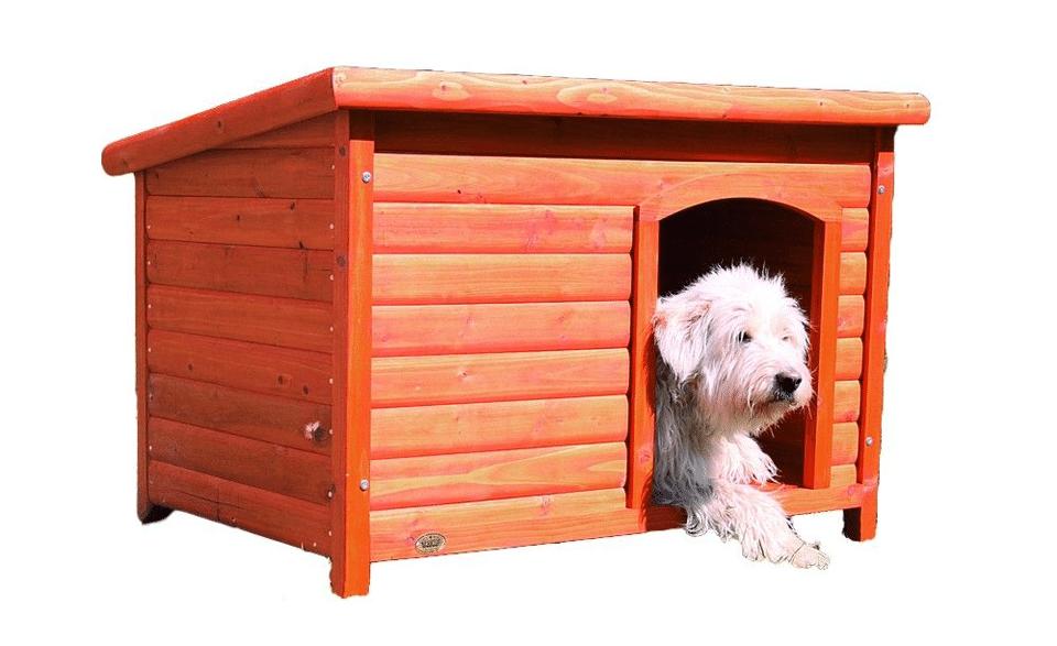 Cățel stând într-o casă din lemn de pin.