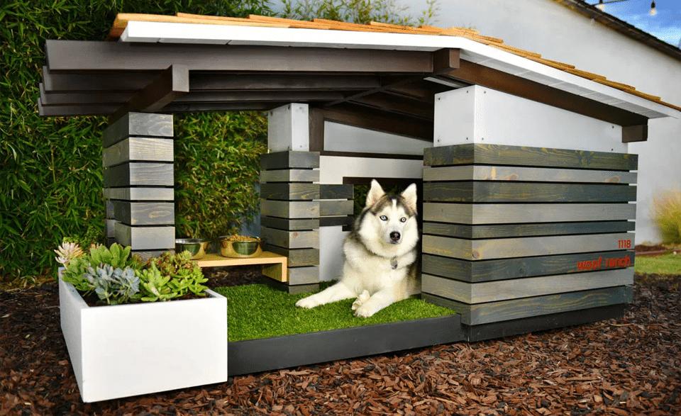 Cele mai bune case pentru câini - Tărâmul Animalelor