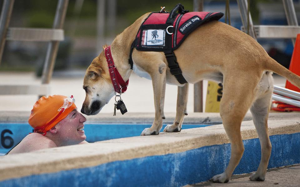 Câine însoțitor stând pe marginea piscinei mirosindu-și stăpâna.