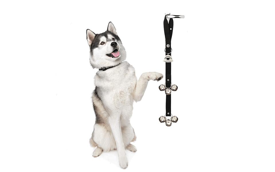 Câine Husky și dispozitiv dresaj Caldwell's Pet Supply Co. Potty Bells.