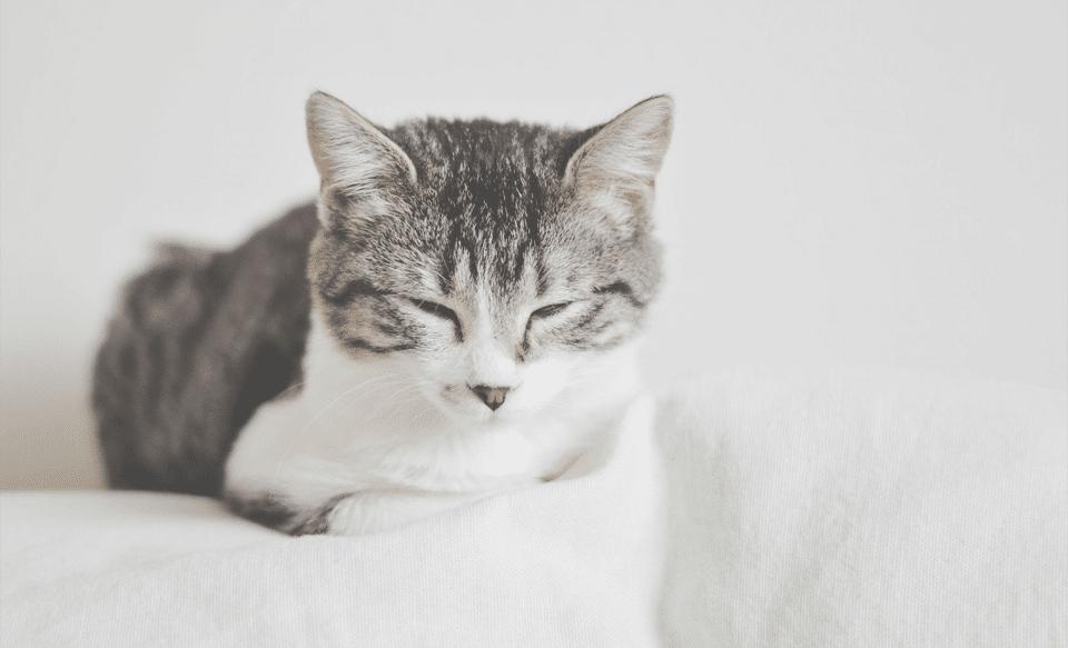 Pisica incercand sa doarma.