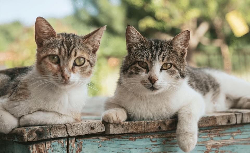 Doua pisici stand pe o banca din lemn.