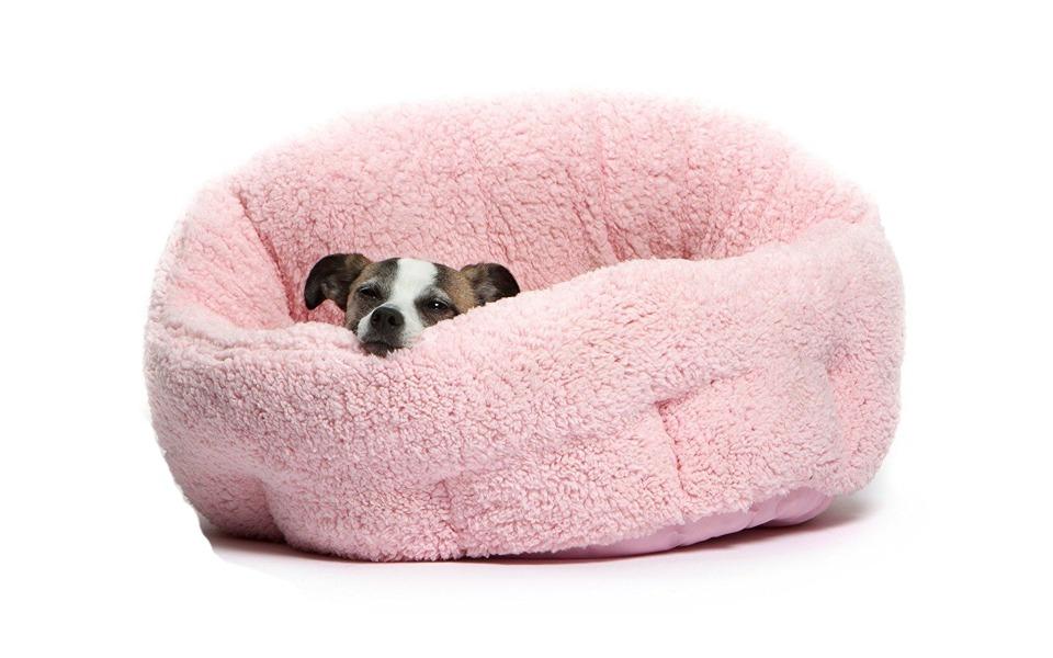Catel stand intr-un culcus roz.