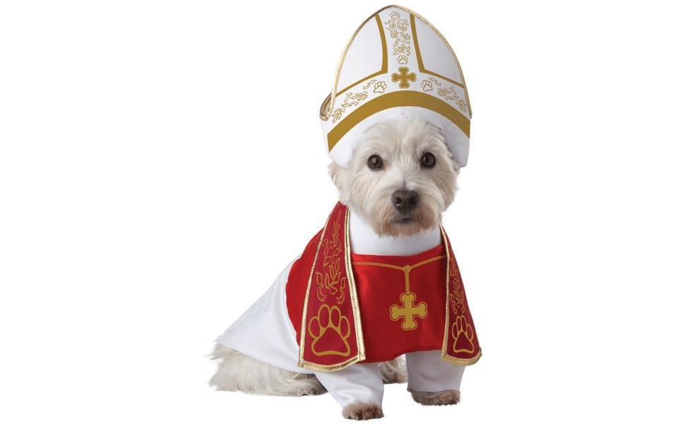 Catel in costum de preot.
