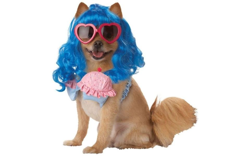 Catel cu peruca albastra si ochelari roz.