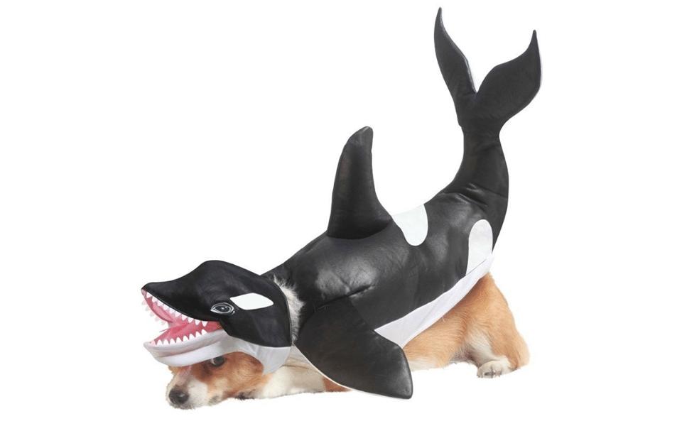 Catel cu costum orca.