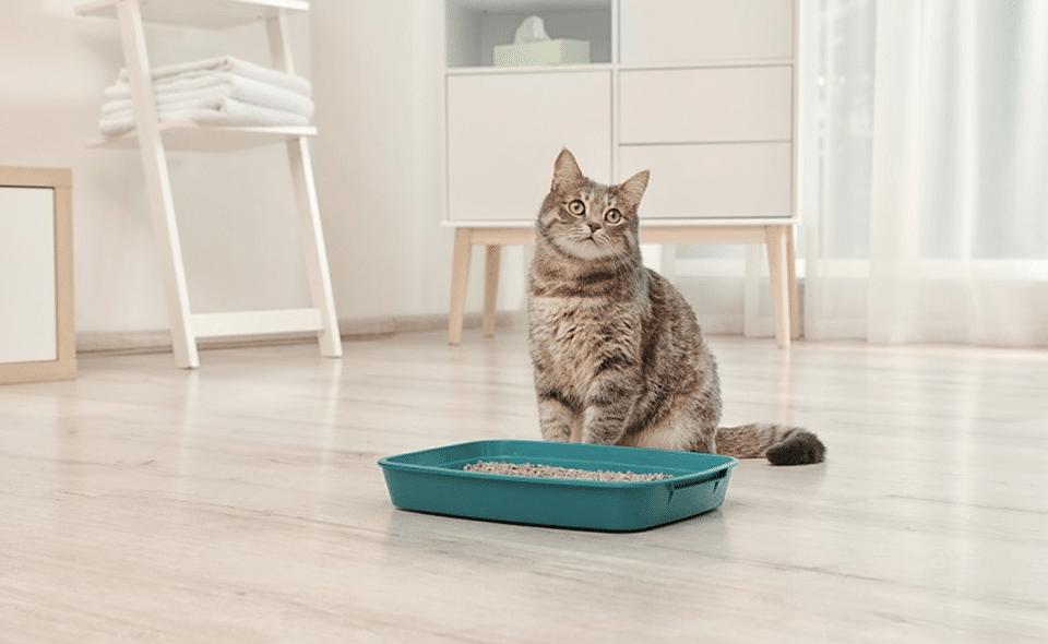 Pisica stand langa o litiera cu nisip verde.