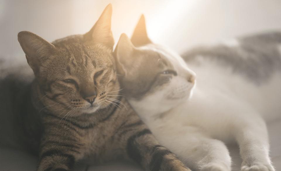 Doua pisici stand una in alta.