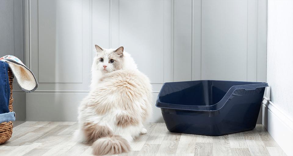 Pisica pufoasa langa o litiera albastru inchis.