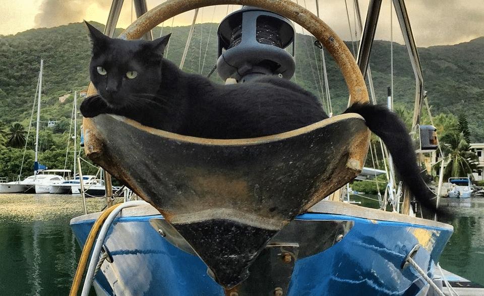 Pisica neagra stand intr-o barca.
