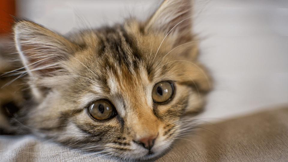 Pui de pisica vazut de aproape.