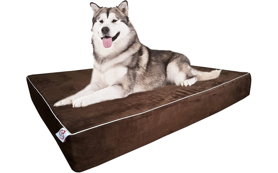 Caine husky stand pe o saltea OnePet-TwoPet Orthopedic Dog Bed.